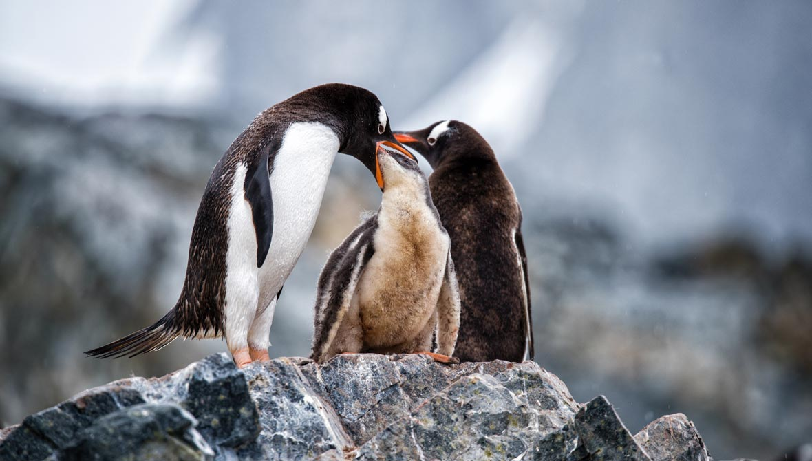 Awe and appreciation in Antarctica