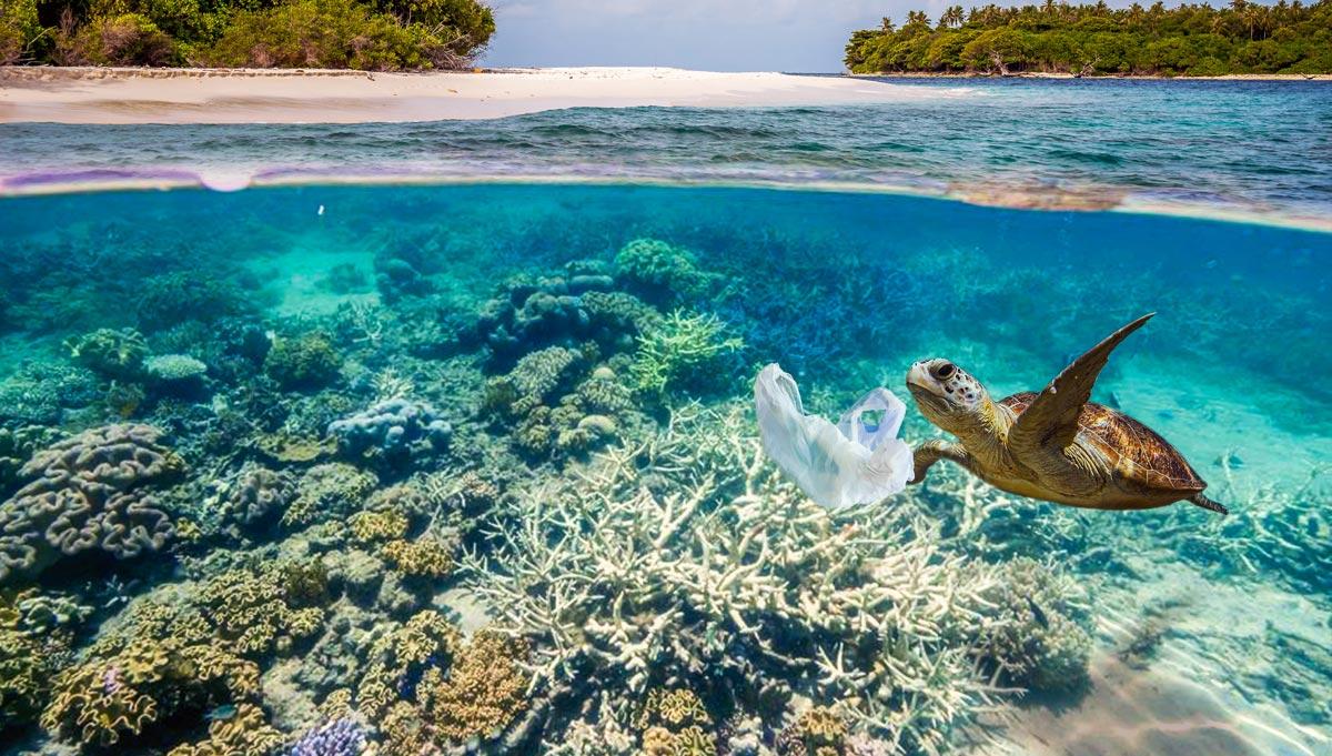 Art for the Oceans