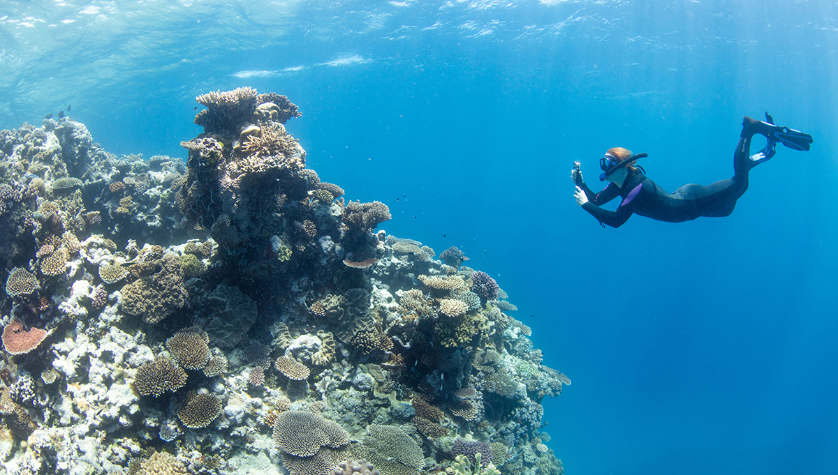 Reef Relief in Queensland